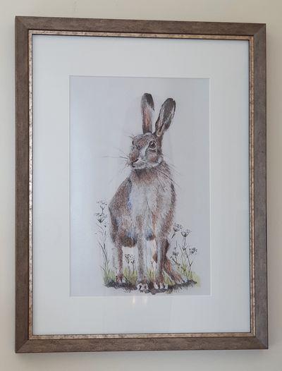 Highland Hare